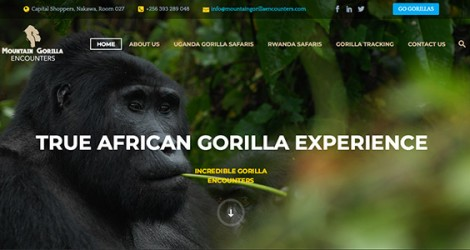 Mountain Gorilla Encounters